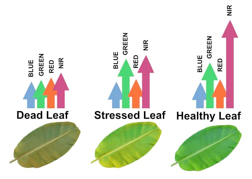 agriculture drones leaf health