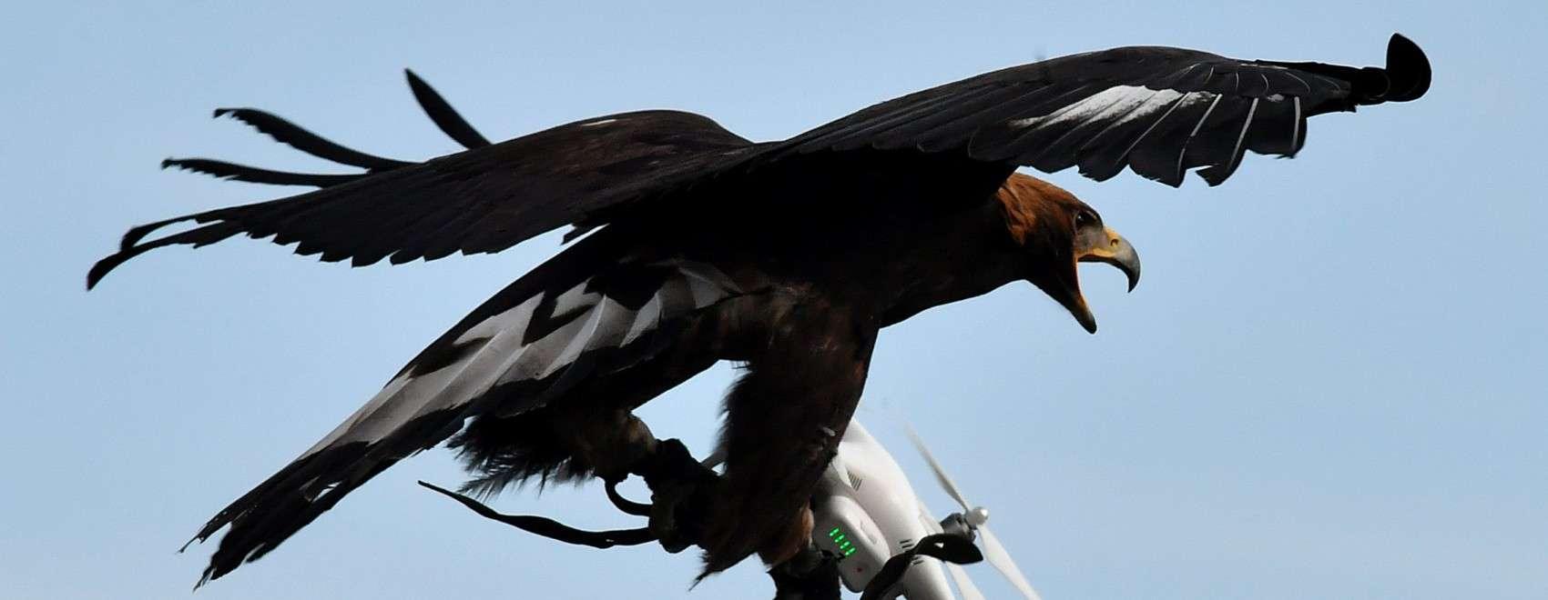 drone mitigation solutions eagle capture
