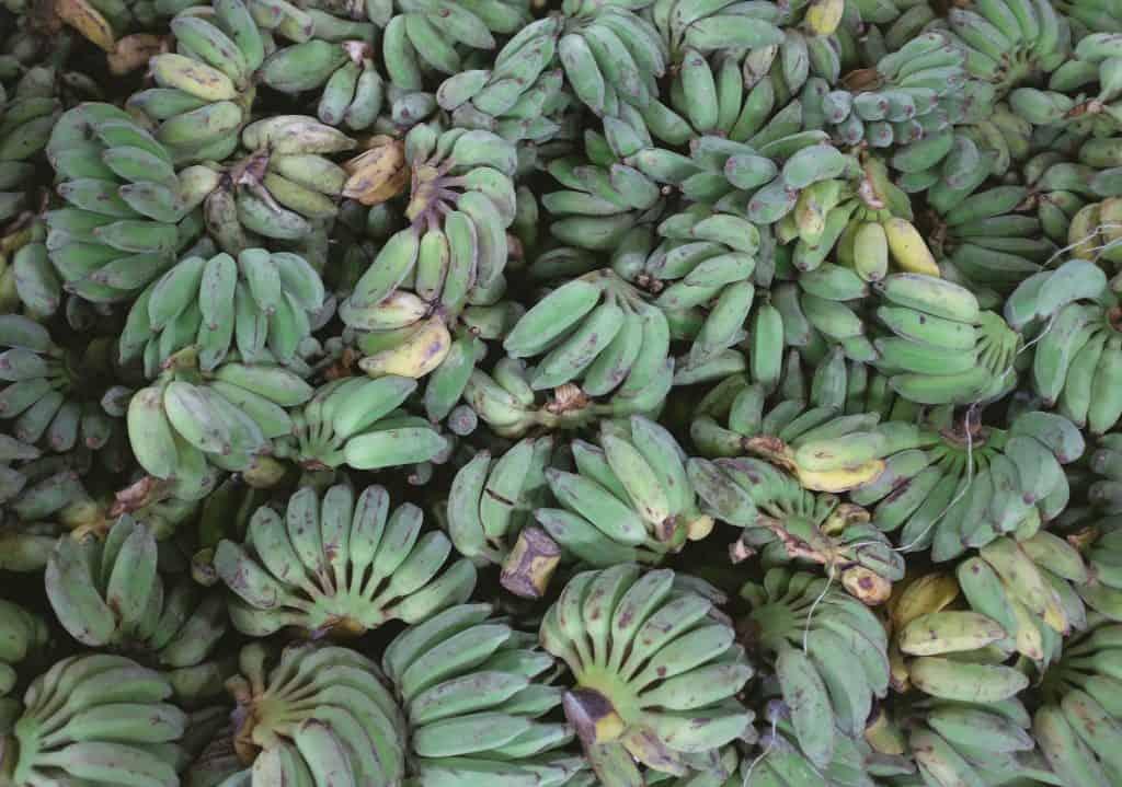 drone farming bananas